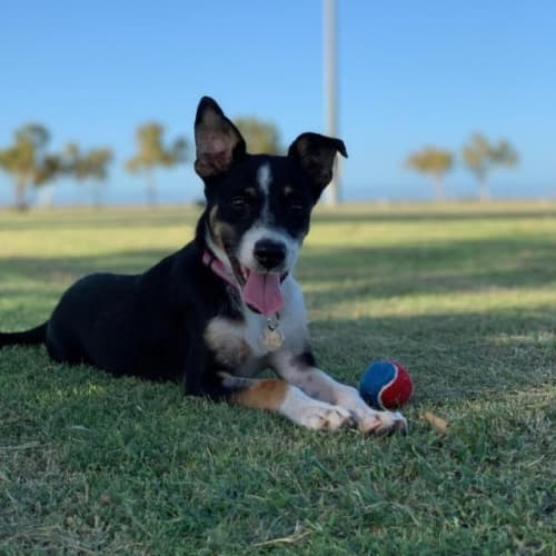 Jaida - Mixed Breed Dog