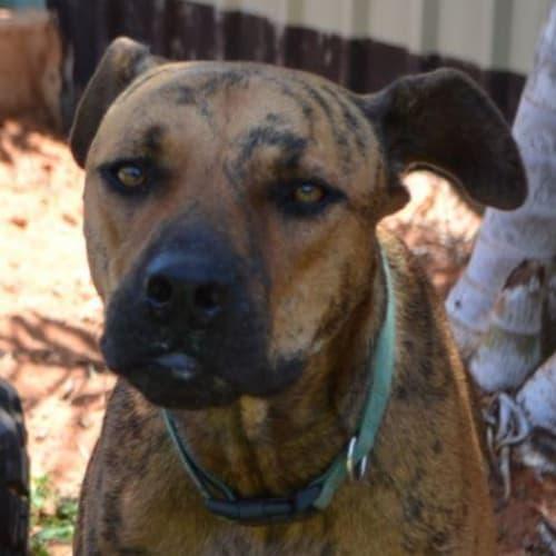 Rusty - Mixed Breed Dog