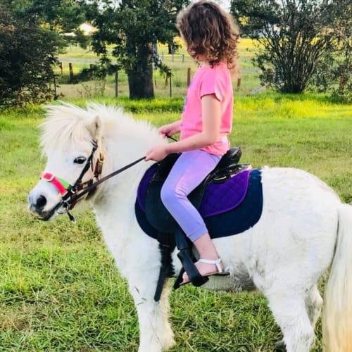 Buddy -  Horse