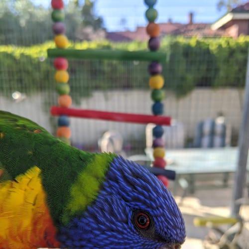 Gizmo -  Bird