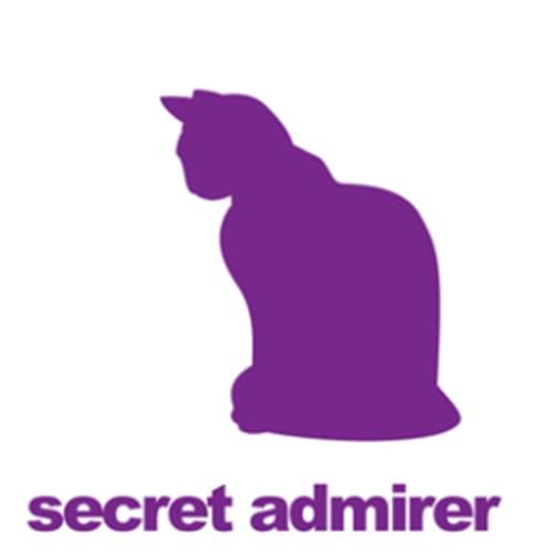 Audrey - Domestic Medium Hair Cat