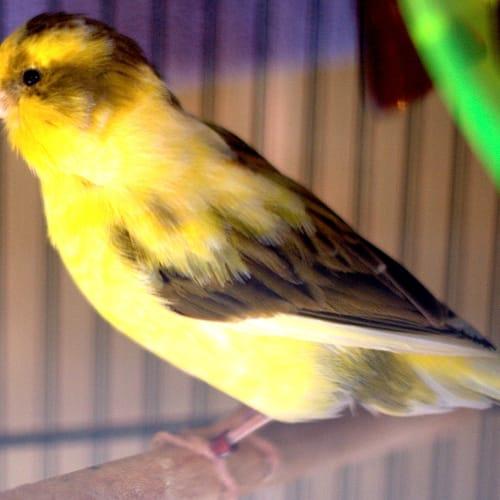 Sunshine -  Bird