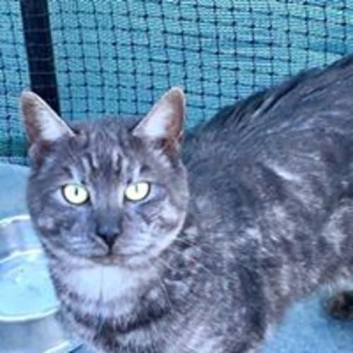 Nigel - Purrfect Match Cat Adoptions