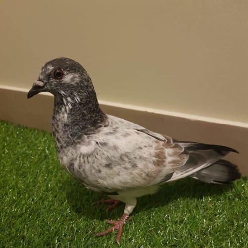 Speckle -  Bird