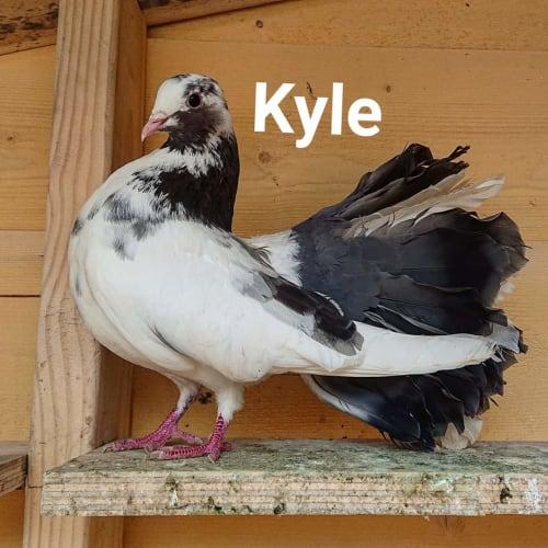Kyle -  Bird