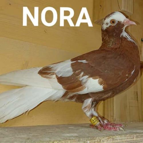 Nora -  Bird
