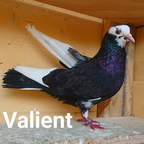 Valient, Carol, Faith and Klaus -  Bird