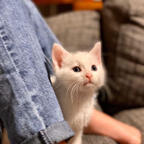 Tabby tail. - Domestic Medium Hair Cat