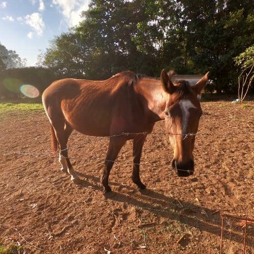 Zephyr -  Horse