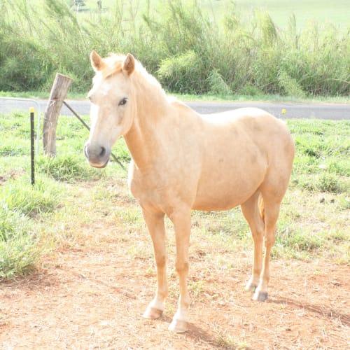 Strawberry -  Horse