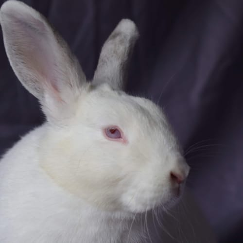 Gabby  -  Rabbit