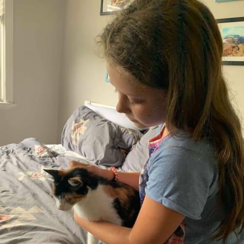 Casey - Domestic Short Hair Cat