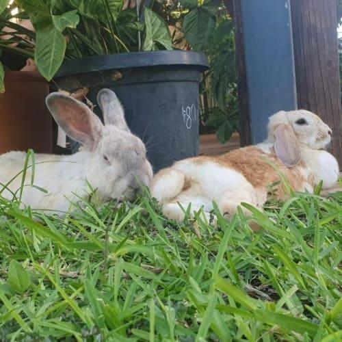 Bam Bam - Bunny Rabbit