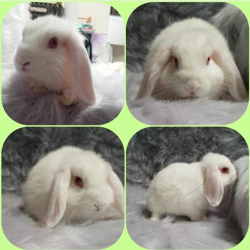 Vanellope -  Rabbit