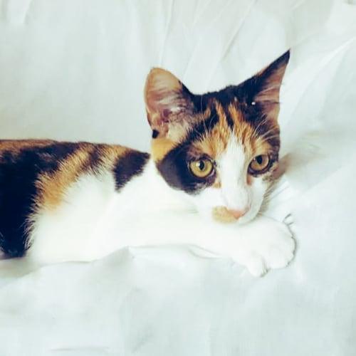 Solstice - Domestic Medium Hair Cat