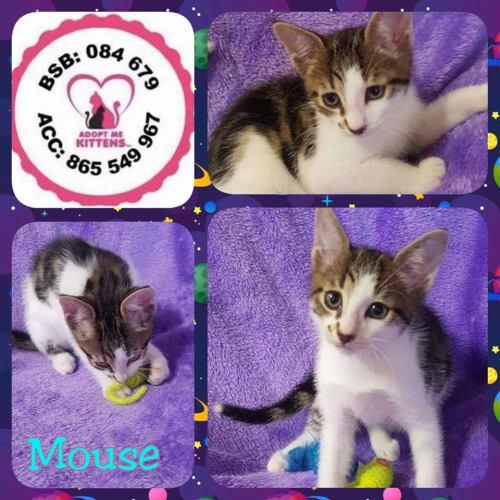 Mouse - Moggie Cat