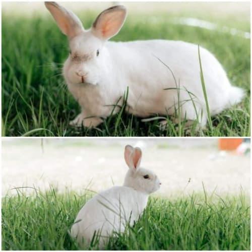 Andrew - Bunny Rabbit