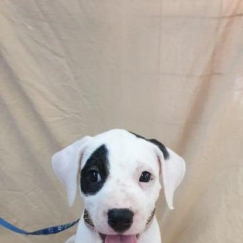 Harper - Mixed Breed Dog