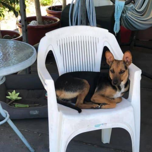 Mum Marylou  - Mini Pinscher Dog