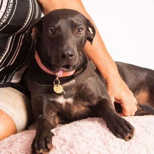 Ellie - Mixed Breed Dog
