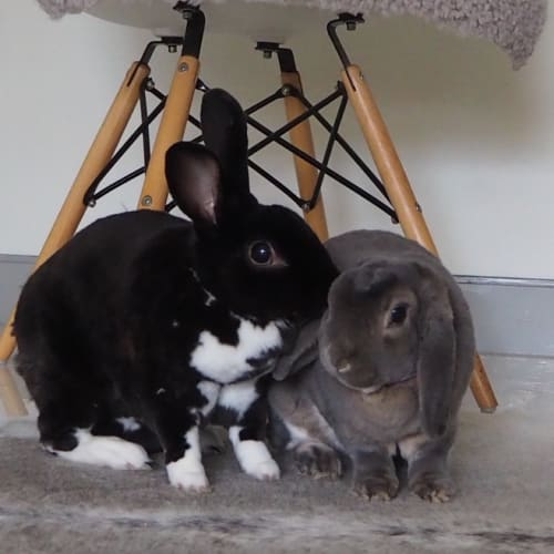Twiggy & Jetpack  - Rex Rabbit