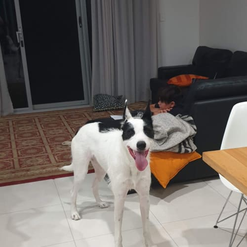 Sean with Jeanette - Irish Wolfhound Dog