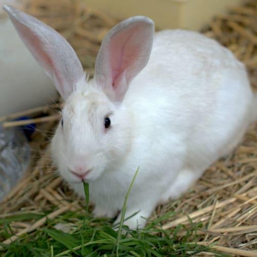 Jasper -  Rabbit
