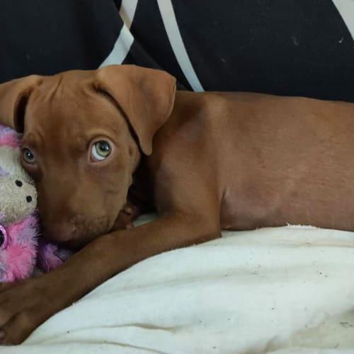 Gypsy - Mixed Breed Dog