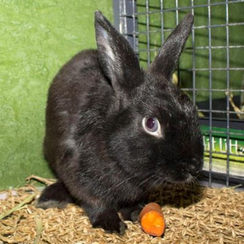 Sanji    934253 -  Rabbit