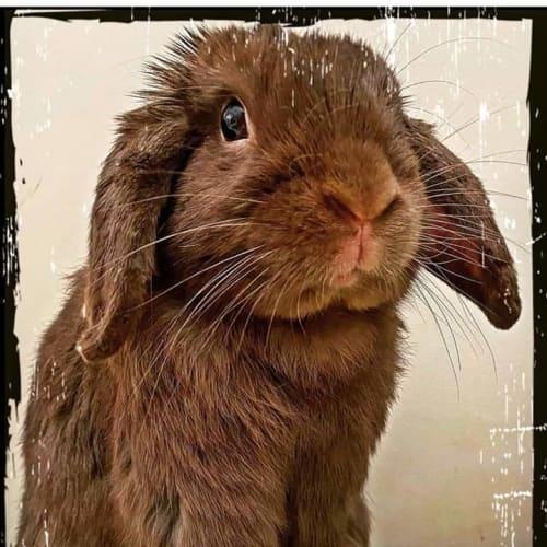 Choco -  Rabbit