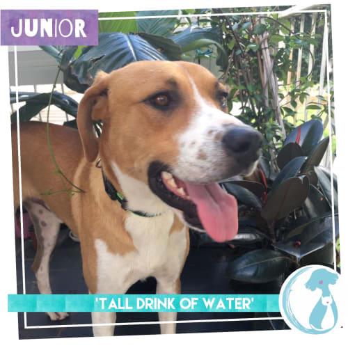 Junior - Mixed Breed Dog