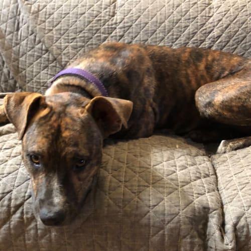 Sugarbag - Mixed Breed Dog