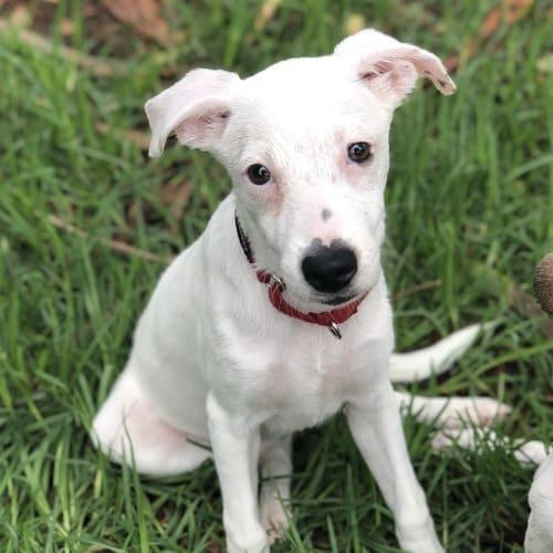 Wendie - Medium Mixed Breed Dog