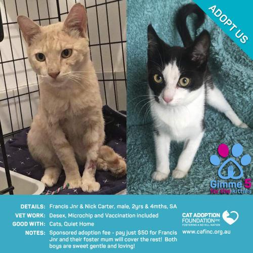 Francis Jnr and Nick Carter - Domestic Short Hair Cat