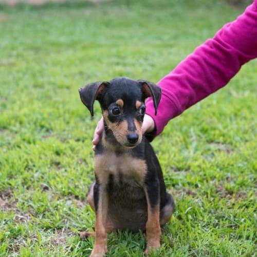 Sizzles - Mixed Breed Dog