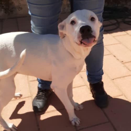 Lucy - Mixed Breed Dog