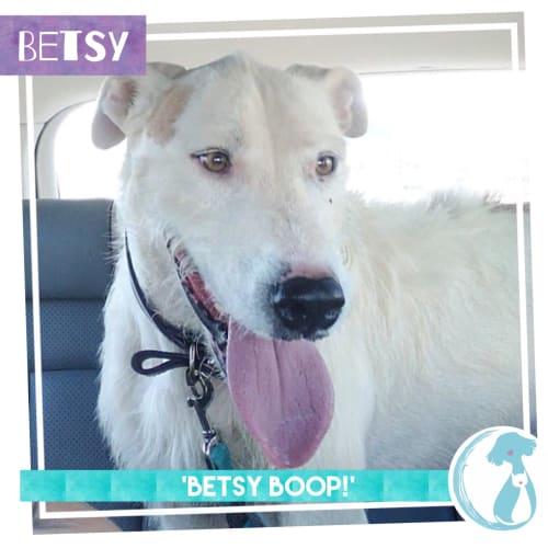Betsy - Irish Wolfhound Dog