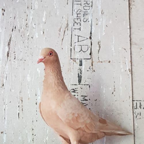 Hawk -  Bird
