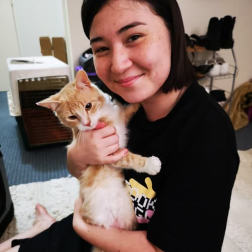 Leon.  - Domestic Medium Hair Cat