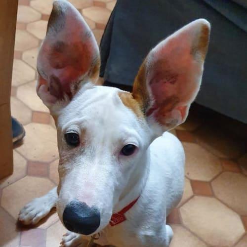 Didgee - Mixed Breed Dog