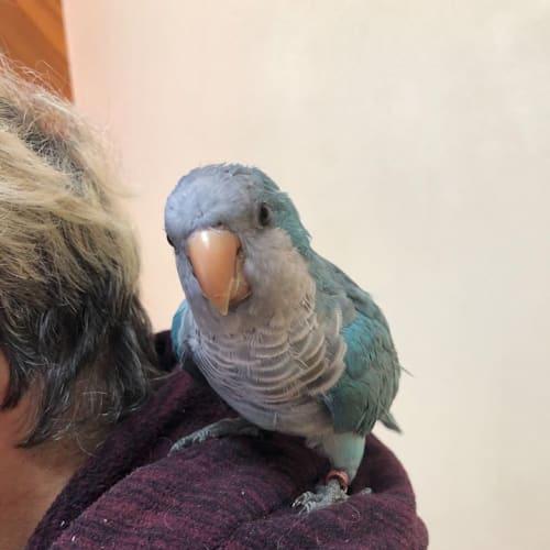 Chloe -  Bird