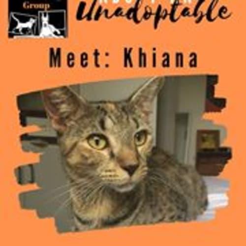 Khiana  - Domestic Short Hair Cat