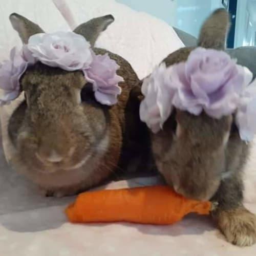 Nutmeg and Honey -  Rabbit