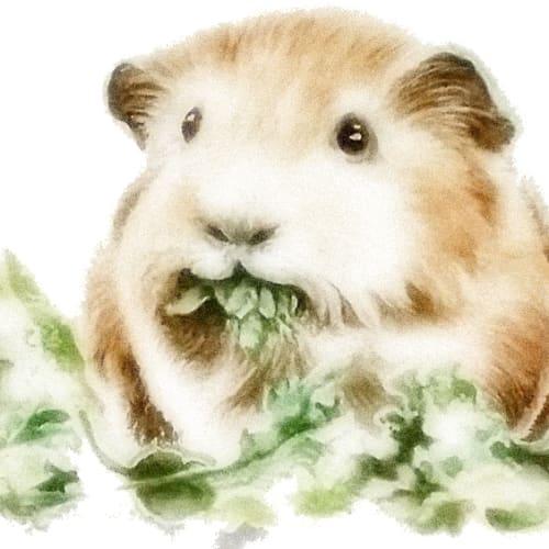 CO VID-19 Adoptions -  Guinea Pig