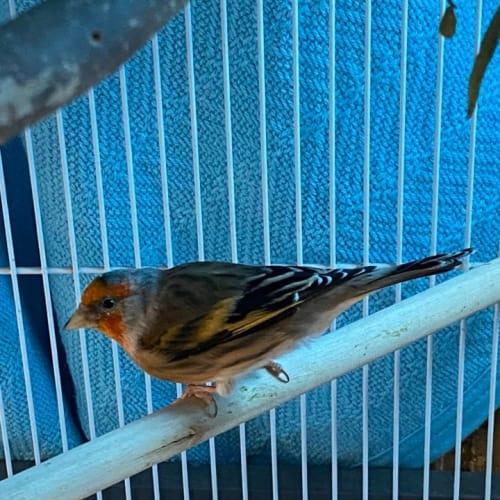 Fajita -  Bird
