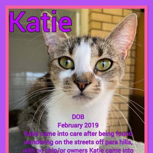 Katie - Domestic Short Hair Cat
