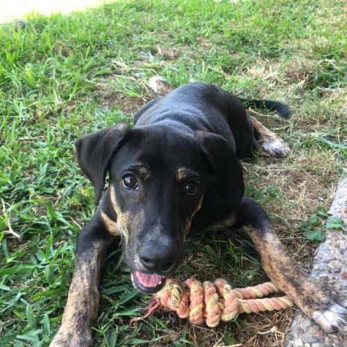 Stella Artois - Huntaway Dog