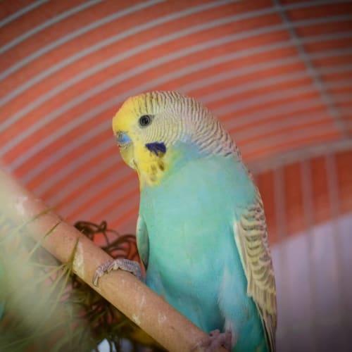 Twistie -  Bird