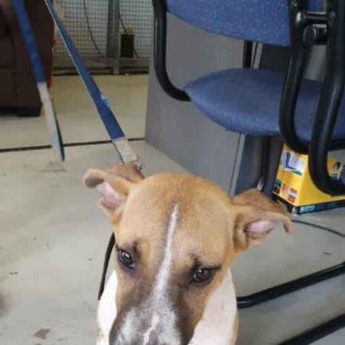 Jasper - Mixed Breed Dog