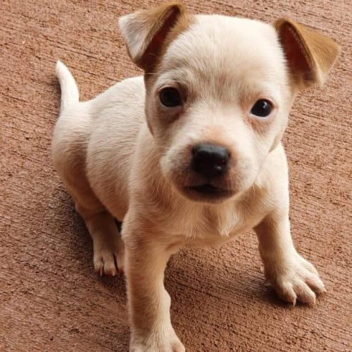 Myer - Mixed Breed Dog